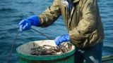TWB_The_Least_Deadliest_Catch-med_(12_of_21).jpg