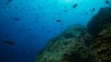 TWB_Underwater_Highways-med_(4_of_25).jpg